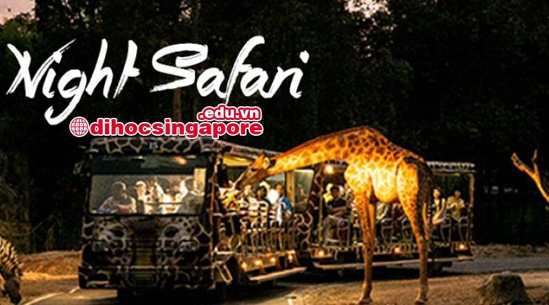 vuon-thu-dem-nigh-safari